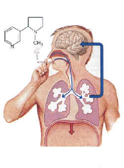 La codificación del fumar del precio en kirove
